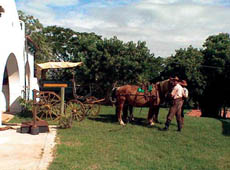 One can go horseback riding with authentic gauchos, or enjoy a horse and buggy ride around the estate.